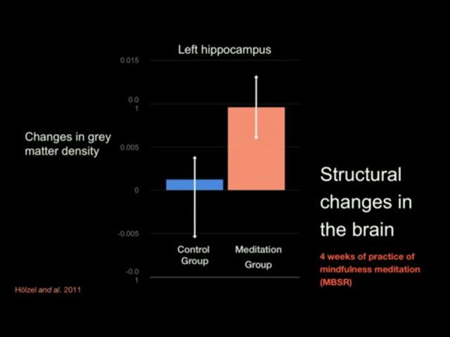 Gray Matter Density Increases During >> Meditation Will Change Your Brain For The Better Sugar Ridge