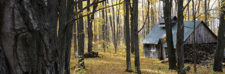 Sugar Ridge Maple Sugar Shack fall