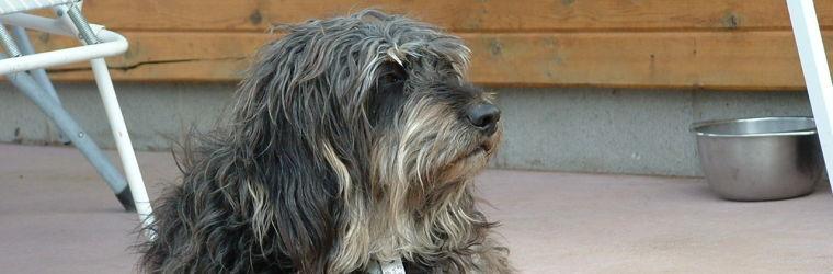 Sugar Ridge Dog Henry