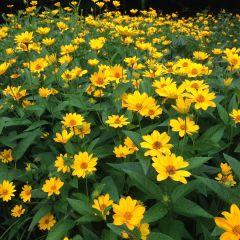 Sugar Ridge Flowers