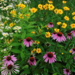 flowers_echinachea.jpg