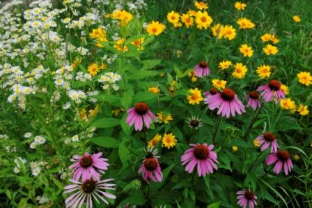 Outdoor Retreat Centre Garden
