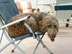 Bob lounging