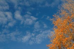Sugar Ridge Sky