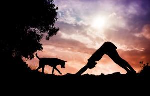 31763361 - man silhouette doing yoga with dog nearby in gokarna, karnataka, india