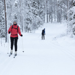 50140929 - woman cross-country skiing in the snowy forest