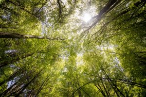 Yoga & Meditation:  Stress Reduction Weekend Retreat @ Sugar Ridge Retreat Centre | Wyebridge | Ontario | Canada