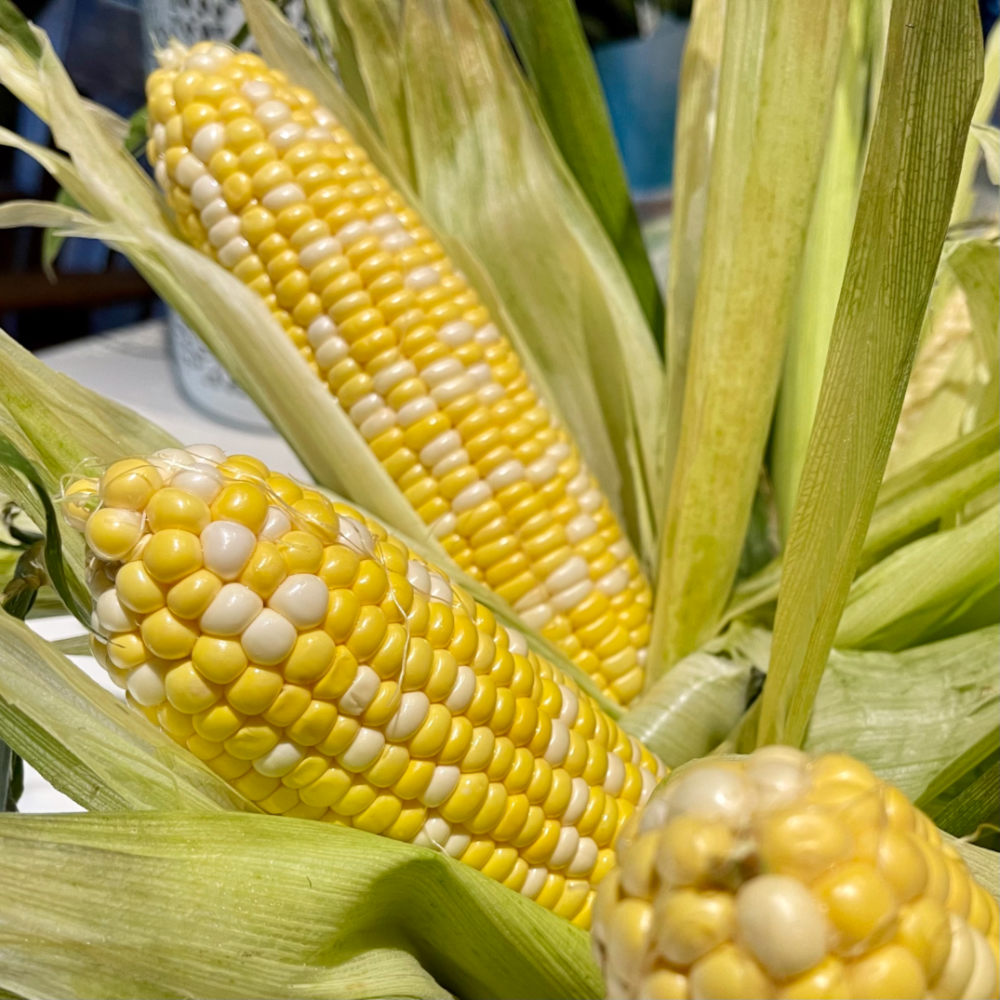 raw corn in husks